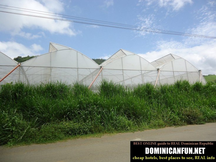 farming and agriculture in Dominican Republic