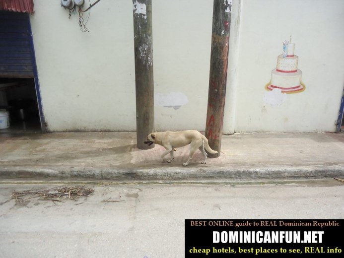 dominican republi stray dogs